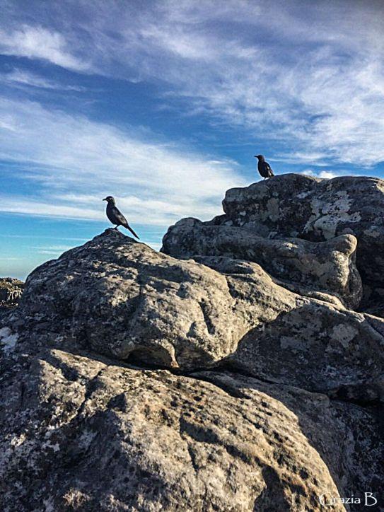 birds-ready