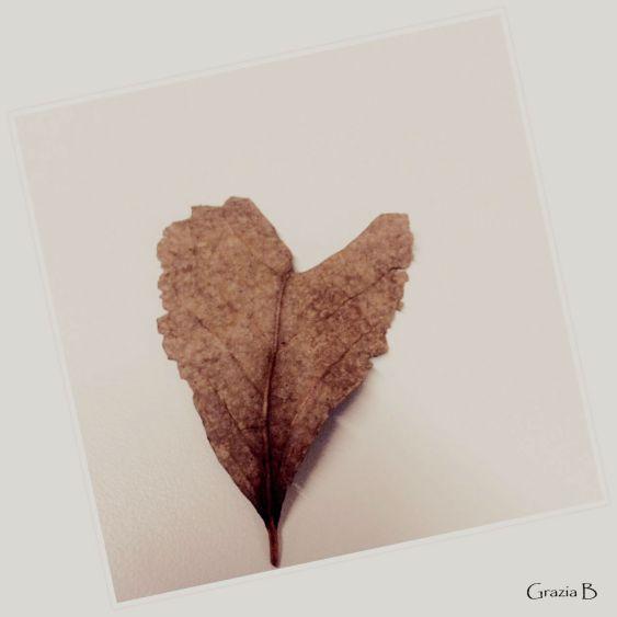 heart-shape-leaf-2