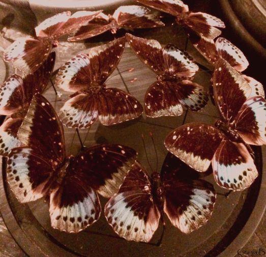 Butterflys 1