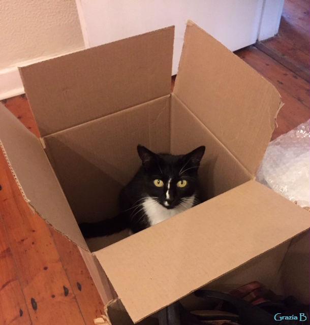 Molly box 1